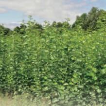 Bioenergiedorf Beuchte KUP
